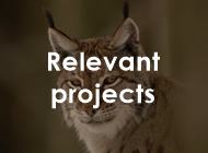 tl_files/carpathiancon/Downloads/02 Activities/Large carnivores/edited/Lynx Relevant projects.png