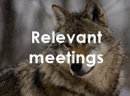 tl_files/carpathiancon/Downloads/02 Activities/Large carnivores/edited/wolf Relevant meetings.jpg